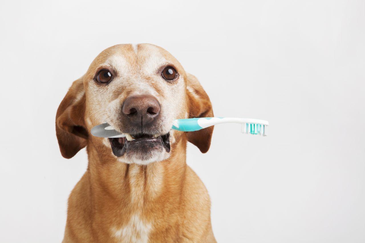 mejores cepillos de dientes para perros 3