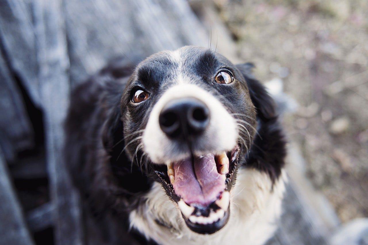 mejores pastas de dientes para perros