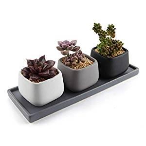 Maceteros pequeños de interior para suculentas y cactus
